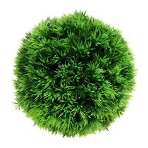 Ball shaped plants