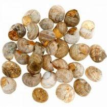 Seashell decoration
