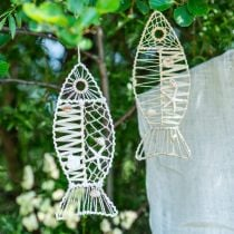 Maritime fish decoration with wickerwork and shells, decoration hanger fish shape nature 38cm