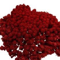 Achillea 1kg wine red