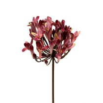 Agapanthus artificial dark red L75cm 3pcs