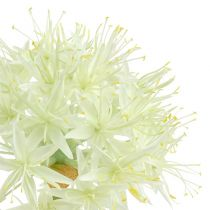 Allium cream white L76cm