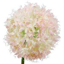 Allium Cream-Pink Ø15cm L70cm