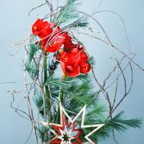 Amaryllis red 75cm