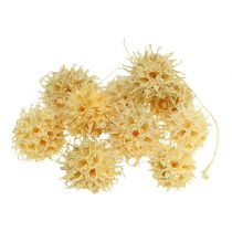 Sweetgum tree fruits bleached 250g