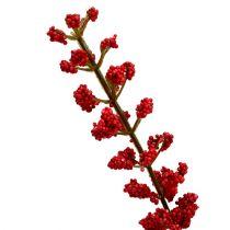 Astilbe bush Red 52cm