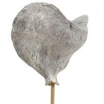 Badam on a stick white washed 12cm L55cm 23pcs