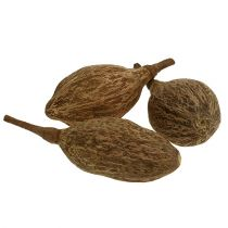 Baobab fruit peeled 15cm - 20cm nature 5pcs
