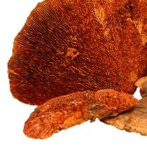 Tree sponge orange 1kg