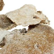 Tree sponge nature washed white 1kg