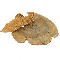 Tree sponge natural 1kg