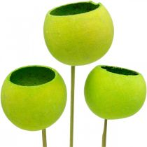 Bell Cup on a Stick Green Dried Exotics 15pcs