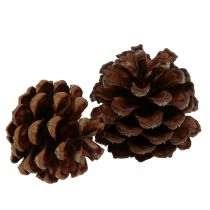 Mountain pine cones small natural 1kg