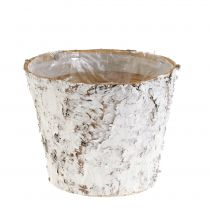 Pot with white birch Ø15cm H12.5cm