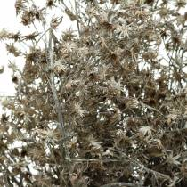 Dried floristry wild flower branch white washed 60cm 100g