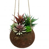 Hanging basket with artificial succulents L65cm Ø16cm