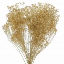 Dried Flowers Broom Bloom Bleached 140g