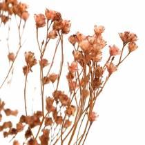 Dried flowers Broom Bloom Brown 170g