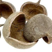 Buddha Nuts 8-10cm white washed 10pcs