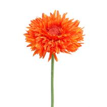 Chrysanthemum Teddy 63cm Orange