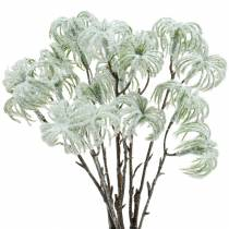Clematis green snowed 43cm 3pcs