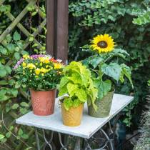 Decorative bucket fruits yellow, orange, green washed Ø12.5cm H12cm set of 3