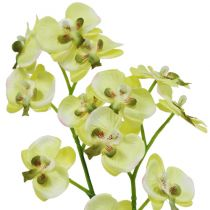 Mini Orchid light green with globe 30cm