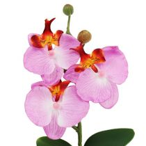 Deco orchid in pot pink H29cm