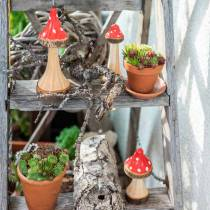 Decorative toadstools made of wood red, natural 13.5cm - 19cm 3pcs