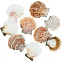 Decorative shell white, red Real shell in a raffia net table decoration 400g
