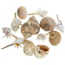 Decorative shells and snail shells empty white, natural decoration maritime 350g