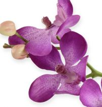Orchid Purple 38cm
