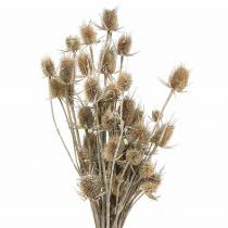 Dried flowers thistle white washed 60cm 100g