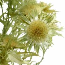 Dry decoration wild thistle light green 85g
