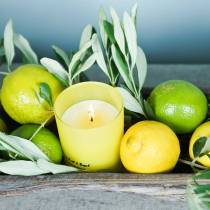 Scented candle in a glass Lemon and basil Ø7cm