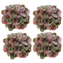 Echeveria Balls Green, Red Ø14cm 4pcs