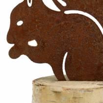 Squirrel rust on trunk H22cm
