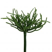 Euphorbia Pick Green 19cm 4pcs
