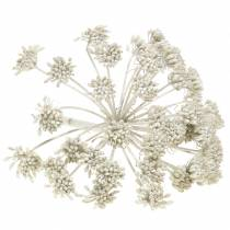 Deco branch Fennel Fruchtstand White washed H22cm
