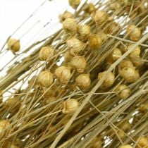 Flax natural grasses for dry floristry 100g