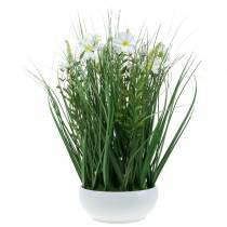 Decorative grass with Cosmea flowers in a bowl H45cm