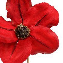 Wood blossom as a plug red Ø9cm - 12cm L45cm 15pcs