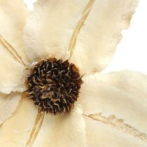 Wood blossom as a plug bleached Ø9-12cm L45cm 15pcs