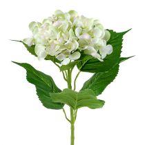 Hydrangea White-Green 60cm