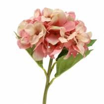 Hydrangea beige / pink 35cm