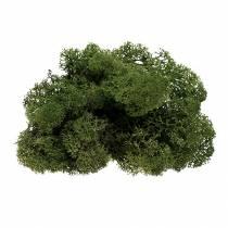 Moss reindeer moss green 500g