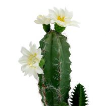 Cactus in pot with flower 21cm white