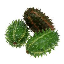 Prickly pear 5cm green-brown 6pcs