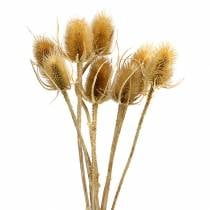 Dried flowers thistle nature 8pcs