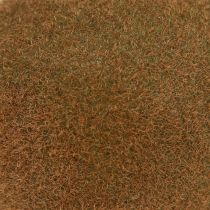 Kiwi 7.5cm